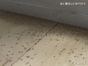 床に散乱した羽アリ